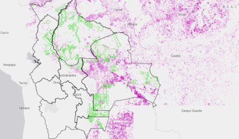 Con fuente de información de Global Forest Watch y datos históricos desde el 2001 al 2019.